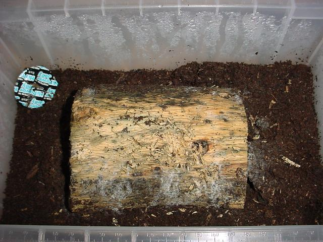 Figure 3.1.2  An example of a breeding container with substrate and a decaying wood