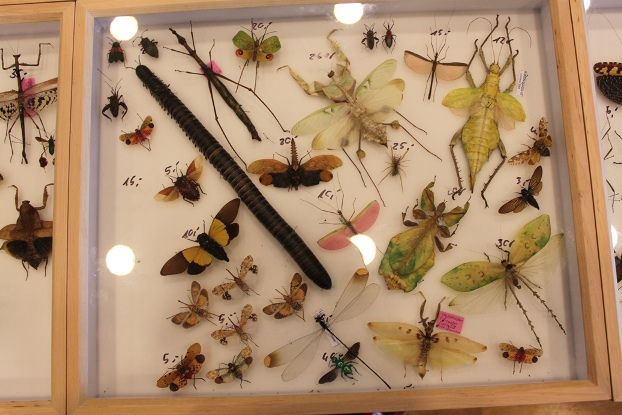 Phasmidae, Mantidae, Orthoptera and more
