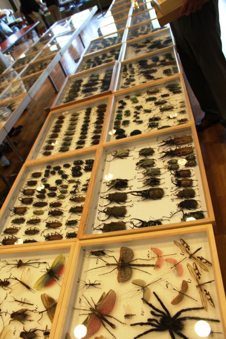 Insects on offer - show specimen