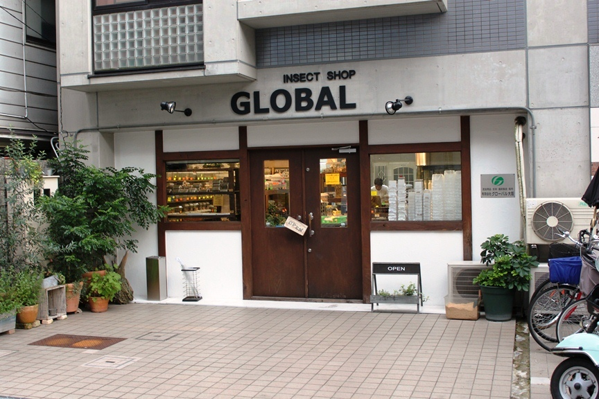 Front Entry of the Beetle Shop Global Insect