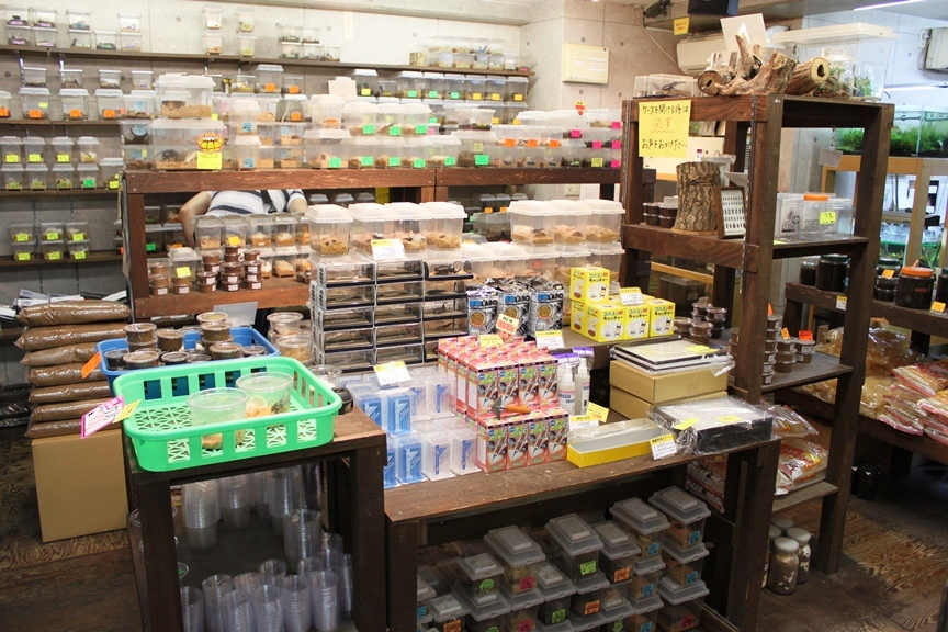 Thousands of beetles and larvae on sale