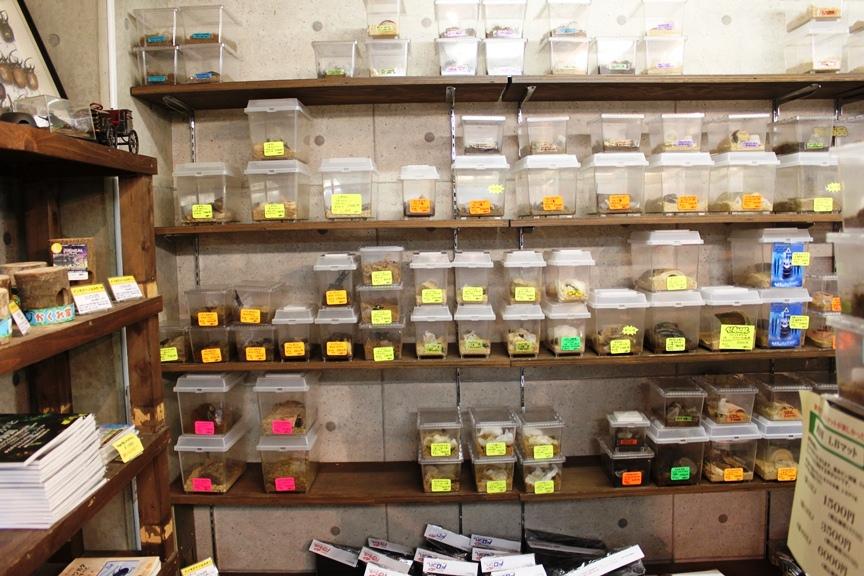 Sales Racks for beetle imagines